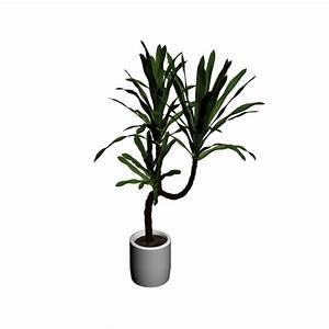 Yucca Palme Blüht : yucca palme einrichten planen in 3d ~ Lizthompson.info Haus und Dekorationen