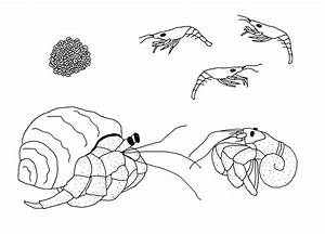 Free Life Cycle Coloring Pages | StuwahaCreations