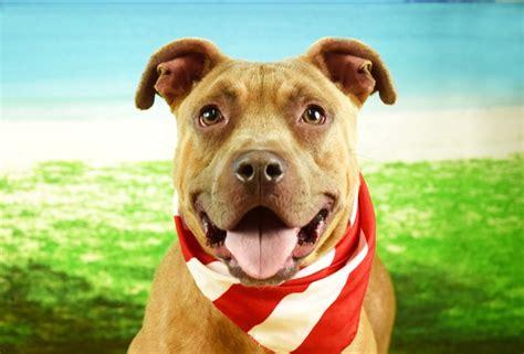 meet flauta shes broward county animal care adoption