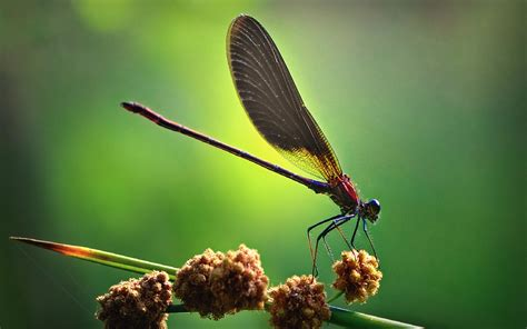 Animated Fly Wallpaper - cool dragonfly pictures hd desktop wallpapers 4k hd