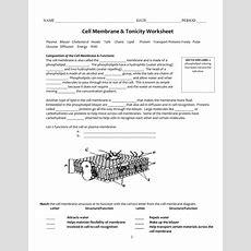 Cell Membrane & Tonicity Worksheet