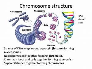 Delta Diagram Of Chromosomes