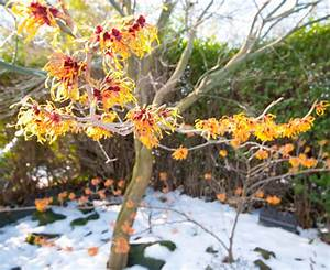 Everything WS: 9 Winter Plants That Dazzle Even in Snow