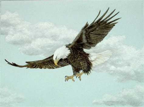 original pastel drawing american bald eagle flying sally