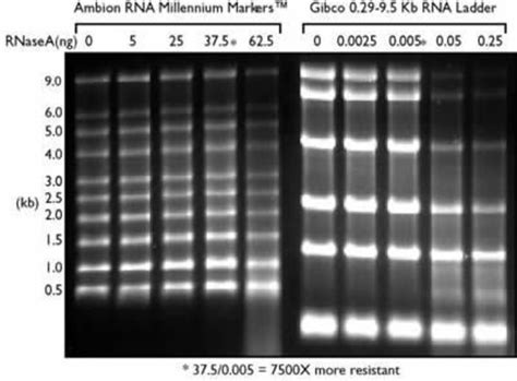 millennium rna markers formamide thermo fisher scientific