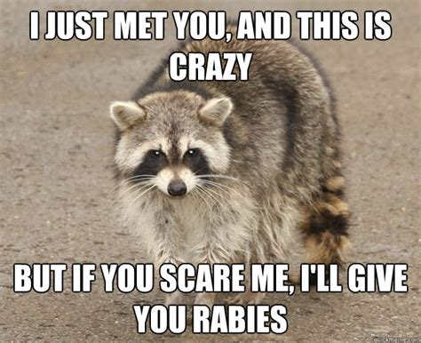 Funny Raccoon Meme - raccoon rabies call me maybe www imgkid com the image kid has it