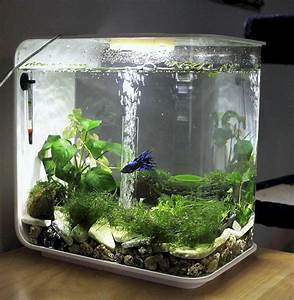 Petit Aquarium Design : 50 beautiful small aquarium ideas to increase your home ~ Melissatoandfro.com Idées de Décoration