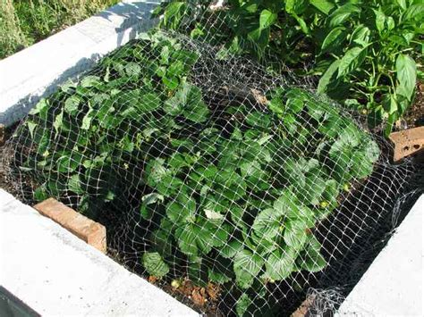 bird netting for garden plant netting for gardens keeps birds out bird b