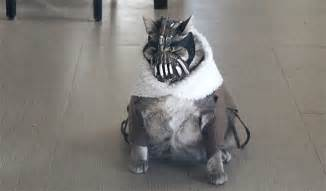 bane cat banecat is much funnier than it has any right to be