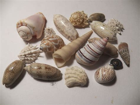 collection  sea shells  stock photo public