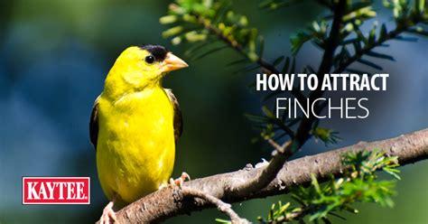 ask the wild bird experts