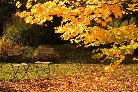 Garten Auch Im Herbst garten im herbst so bleibt er l 228 nger nutzbar plantura