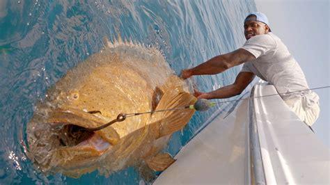 goliath groupers monster fishing barrington sam 4k biggest ever nfl grouper blacktiph linebacker giant frog recorded could king shark hook