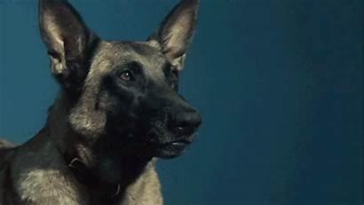 Barking German Dog Shepherd Gifs Animated Friendly