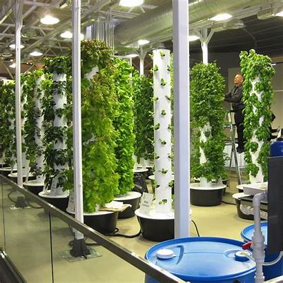 Indoor Garden Growing Inside Grow Farming Own