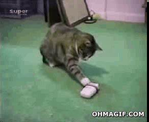 Funny frightened cat - Funny Gifs and Animated Gifs