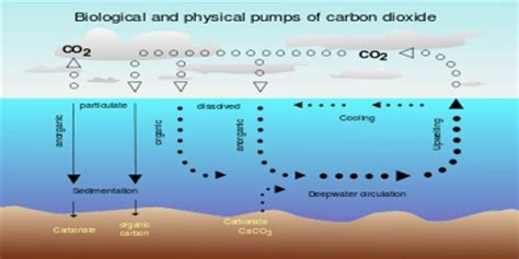 define carbon sink geography carbon sink assignment point