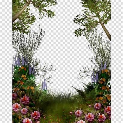 Garden Rose Transparent Clipart Pngio