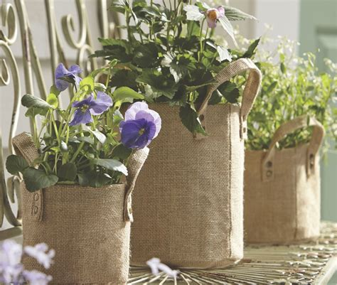 when to bring plants inside bring plants indoors for the winter