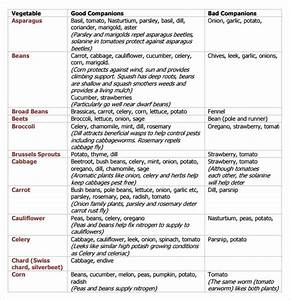 Free 7 Sample Companion Planting Chart Templates In Pdf