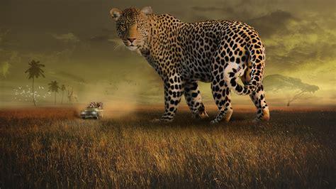 leopard safari  wallpapers hd wallpapers id
