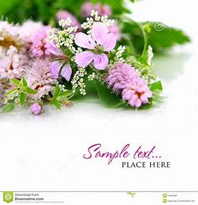 Bouquet Of Wild Flowers On A White Background Stock Image ...