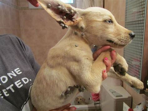 adorable puppies rescued   negev national