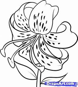 Top 358 ideas about drawing flowers on Pinterest | Drawing ...