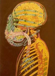 Facehugger  Alien Anatomy