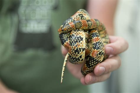 Ssssssscary: Snakes Don't Have to Be Frightening, But They ...