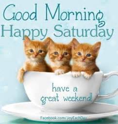 cat saturday morning happy saturday cats pictures photos