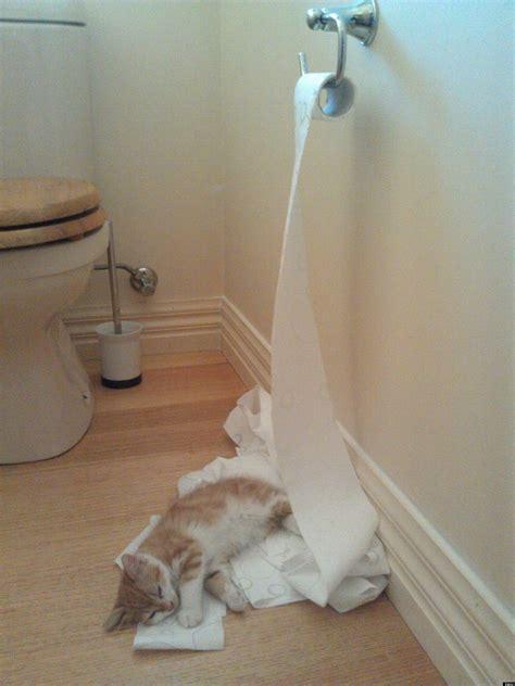 kitten unrolls toilet paper roll falls asleep exhausted
