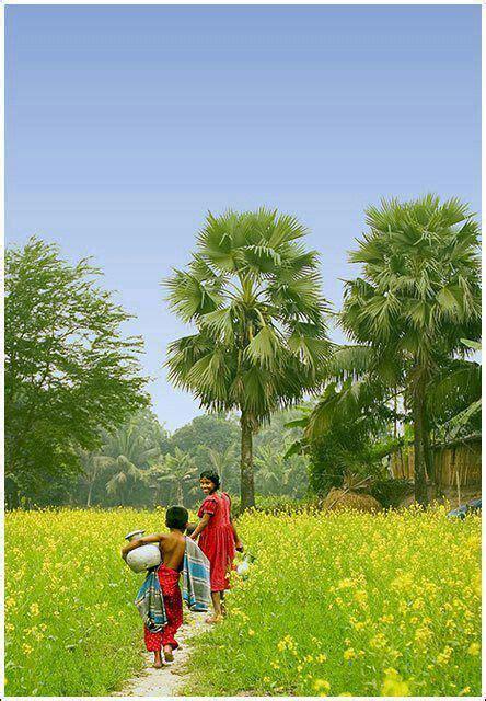 beautiful green view beautifulplaces bangladesh