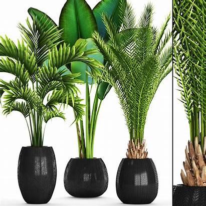 Tropical Plants Plant Models Cgtrader Pot