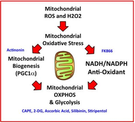 vitamin cancer cells mitochondrial stem science treatment stress oxidative naturalnews therapy effects proves ignorant skeptics hopelessly medicine advanced once comes