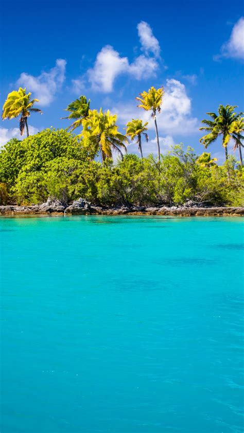 exotic blue lagoon android wallpaper