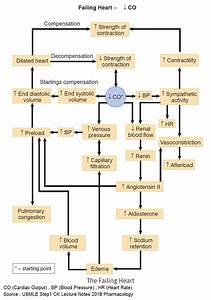 33 Congestive Heart Failure Pathophysiology Diagram