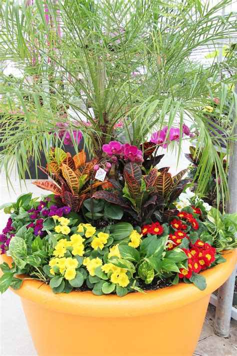 plants for planters 16 best images about tropical plants on pinterest planters yellow and one pot