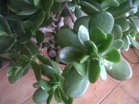 plante de bureau feng shui 28 images vivre feng shui bordeaux energies des plantes les quot
