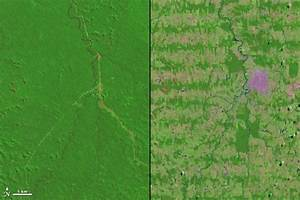 View from space: Amazon deforestation 1975 to 2012 | Earth ...
