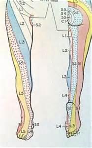 Groin Nerve Dermatome