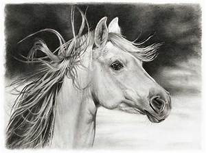 Pencil Drawings by Linda Huber | horse pencil drawing ...
