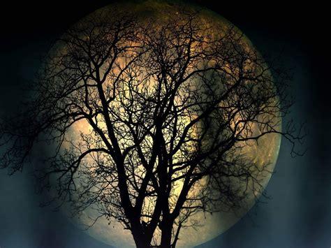 full moon lonely tree   night  resolution dark