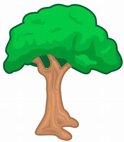 Tree Trace Clipart Clip Trees Stencil Copac