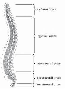 Клиника лечение позвоночника остеохондроза в спб