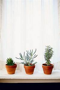 Indoor Hanging Plants Low Light Sturdy Houseplants Popular Easy Care Potted Plants