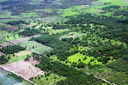 Indonesia Peatland Wetlands Distribution International Data