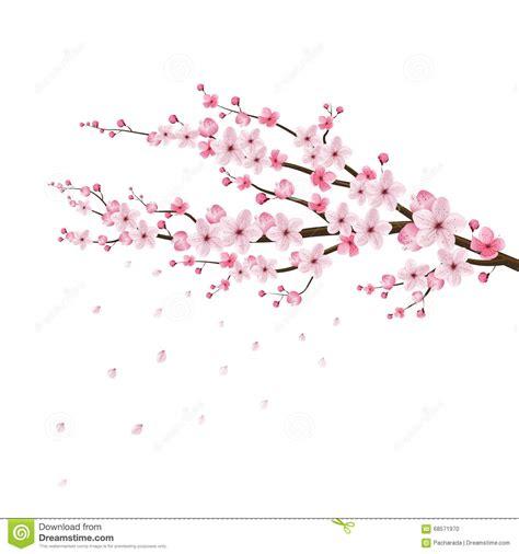 foto de Vetor Realístico Da Flor De Cerejeira Sakura Japão