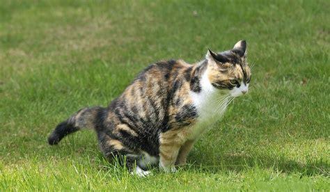 rid  cat urine smell  carpet  house