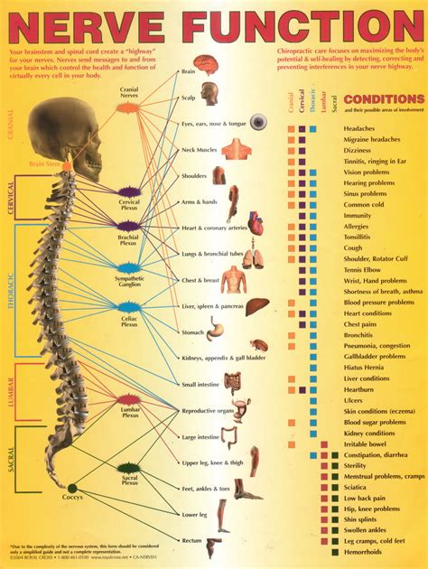 Ct, mri, radiographs, anatomic diagrams and nuclear images. nerve function chart | Nerve anatomy, Nerves function, Human anatomy and physiology